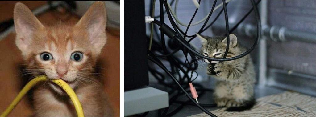 Кот грызет витую пару